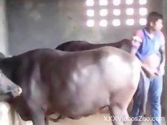 Zoo Hardcore - Animal Porn. Sex With Animals. Sex Zoo Videos. Free ...